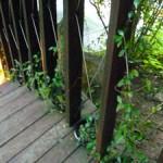 装迎遊居 の緑